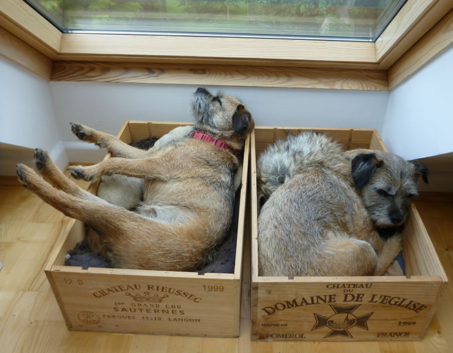 Mattie (left) and Tiggy, my constant companions in my office. They have a wine box each and show no interest in my writing whatsoever.